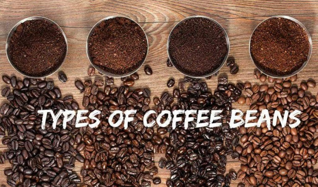 Image result for Coffee Bean Varieties and Types