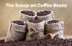 The Scoop on Coffee Beans